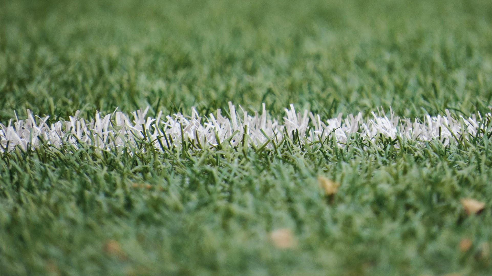 grass-grassland-54567